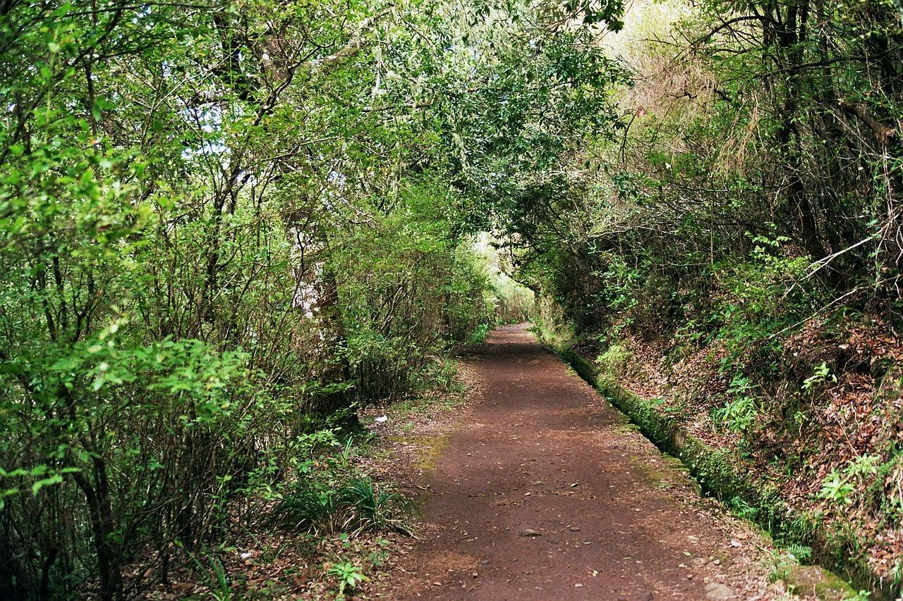 Madeira levada wandelen
